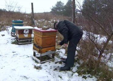 Zniszczone ule i zabite pszczoły w Wielkopolsce