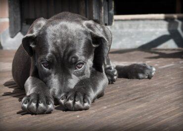 Bezdomne psy z Krakowa zamieszkały w pawilonie wartym ok. 5 mln zł