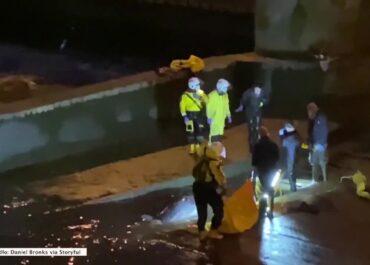 Wieloryb utknął w śluzie w Tamizie. Akcja ratunkowa trwała cztery godziny.