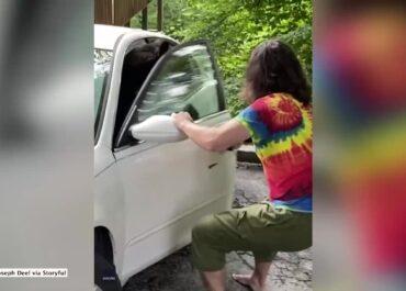 Niedźwiedź zatrzasnął się w samochodzie. Właściciel auta otworzył mu drzwi i go wypędził.