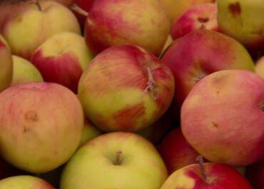 Dziś Światowy Dzień Jabłka! Dlaczego warto jeść te owoce?