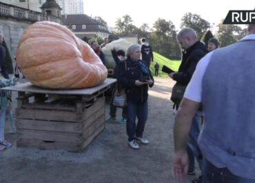 Wybrano najcięższą dynię w Europie. Ogrodnik z Toskanii wyhodował olbrzyma o wadze 1226 kg.