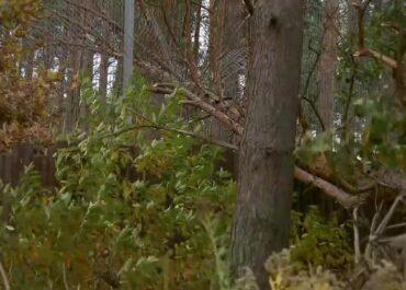 Zniszczone ogrodzenie przy wybiegu lwów, ewakuacja zwiedzających z ogrodu zoologicznego w Poznaniu