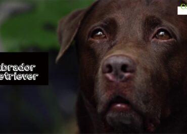 Dziś Światowy Dzień Zwierząt! Sprawdź 10 najpopularniejszych rodzinnych ras psów.