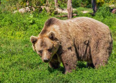"""""""Pacjent wypuszczony do domu po zetknięciu z niedźwiedziem może mówić tylko o szczęściu"""". Turysta próbował zrobić sobie selfie z misiem w Tatrach"""